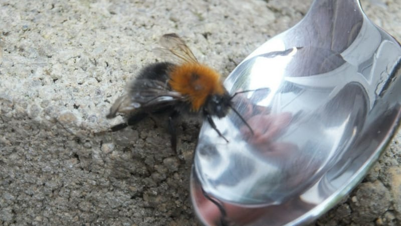 conservation for kids- first aid for bees