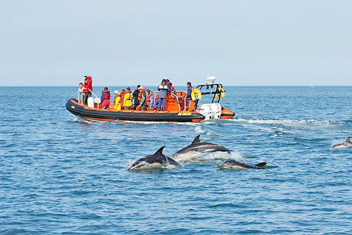 dolphins in padstow cornwall