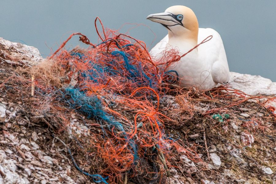 Bird nesting in plastic fishing nets