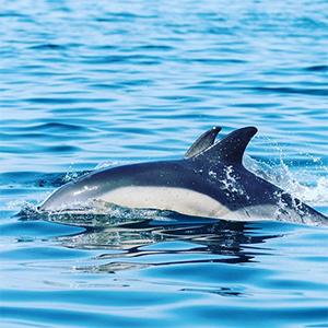 padstow sea life safari box1 dolphin