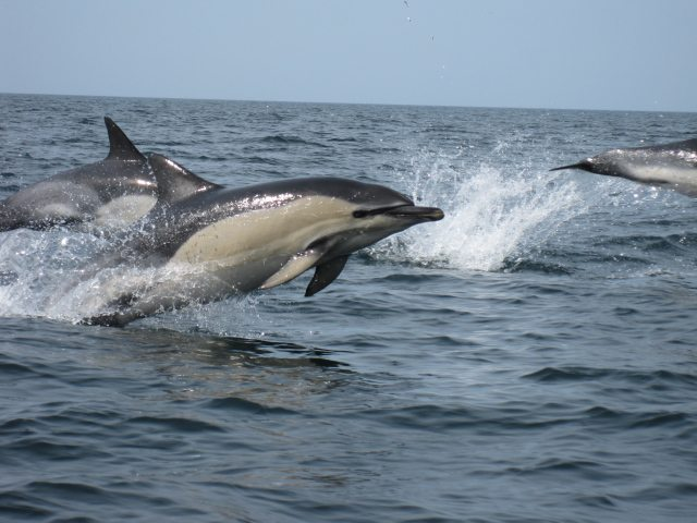 Spotting Dolphins