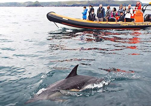 the-best-boat-trips-in-padstow-cornwall-dolphins-4